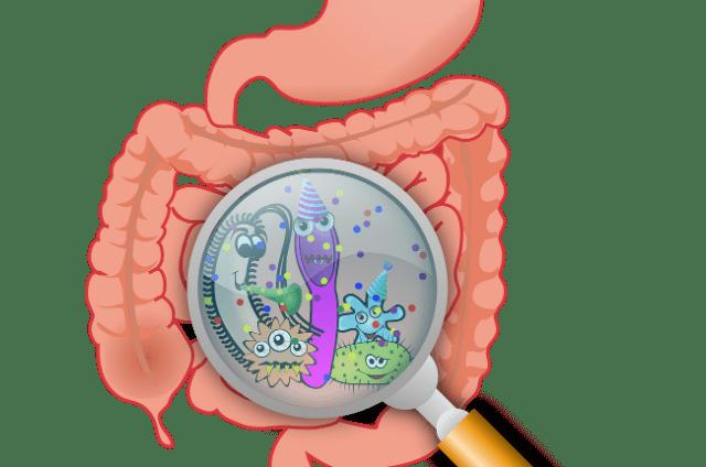 tarmbakterier er nøgle til din syndhed