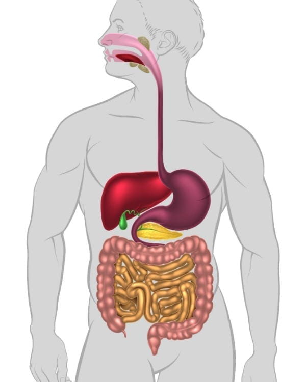 boca-esófago-estómago-recto-es